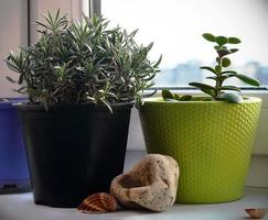 Two potted plants on window sill with various objects photo