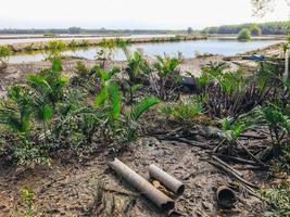 bosque de manglares tropicales. Recuperación de la naturaleza del bosque de manglares en Samut Prakan, Tailandia foto