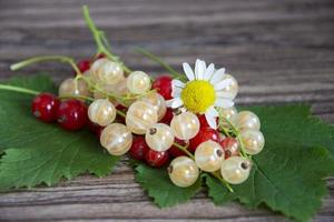 Currant berries close-up. Red and white currants with chamomile flowers on a wooden background. photo