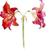 beautiful watercolor flower vector