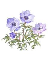 beautiful watercolor flowers vector