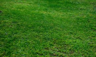 Summertime background with green grass photo