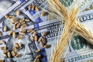 US dollars and ripe ears and seeds of yellow wheat in Brazil photo