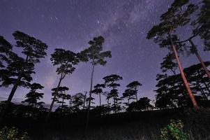 Hermoso cielo nocturno lleno de estrellas en el bosque de pinos, el parque nacional de phu soi dao, provincia de Utaradit, Tailandia foto