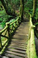 Wooden bridge in to the jungle background photo