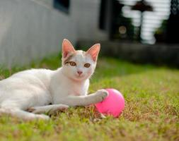 Cute cat playing pink ball in the green grass photo