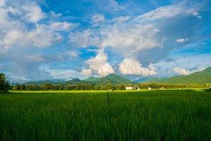 Green fields in the rainy season and pink sky beautiful natural photo