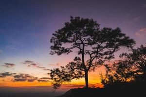 Silhouette of pine tree at the hill with sunset photo