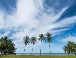 Beautiful tropical beach with palm trees photo