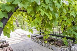 Hermoso parque y portón con plantas. jardines botánicos de perdana malasia. foto