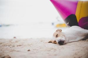 Sleeping dog on the beach near the banana boat photo