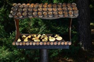 pajarera de madera marrón, comedero instalado en el parque. cuidado de aves silvestres, hogar y alimentación. nido de pájaro en primavera foto