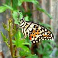 Butterfly perched on the top of the leaf and the background is blur photo