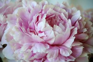Flowering pink flower in a vase on a porch photo