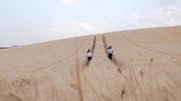två unga kvinnliga vänner som njuter av naturen tillsammans medan de går i ett vetefält. video
