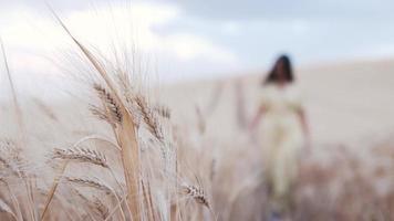 kvinna i en klänning som går genom ett vetefält. natur och jordbruk koncept. video