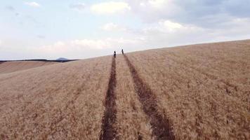 flygfoto över två vänner som njuter av naturen medan de går genom ett vetefält tillsammans. video