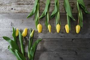 Beautiful Yellow Tulip Flowers On The Wood Table. Festive Background. photo