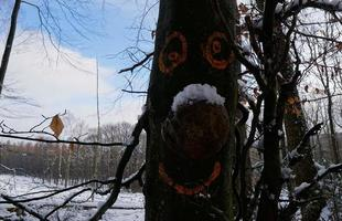 Beautiful White Winter In The Forest, Frozen Branches With Snow And Natural Funny Face Of The Tree. photo