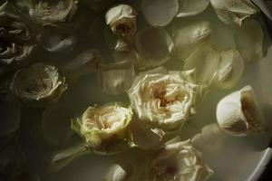 Beautiful Footbath. Water With Milk And White Roses. photo