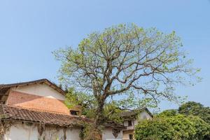 There is a tree beside the house by the road photo