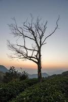 The golden sky at dusk and the silhouette of black trees on the mountains photo