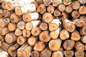Apilar troncos de troncos de árboles de madera en el bosque, pilas de leña o almacenamiento de leña para restaurante o industria foto