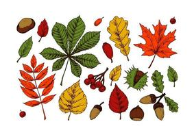 Set of autumn forest design elements including. Hand drawn autumn clipart with leaves, acorns, berries, chestnuts. Vector illustration isolated on white. Colored sketch