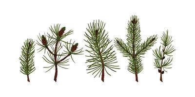 Set of hand drawn evergreen plants in colored sketch style isolated on white background. Vector illustration of pine, fir tree, larch, Christmas tree branches. Christmas and New Year decor element