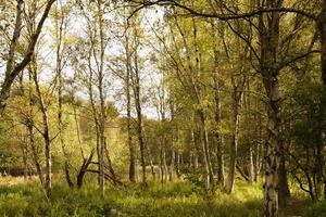 The bog of Ruebke nature reserve photo