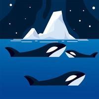 orca whales iceberg sea north pole night vector