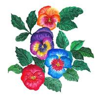 ramo de acuarela de pensamientos tricolores: capullos de color púrpura, rosa, naranja, azul vector