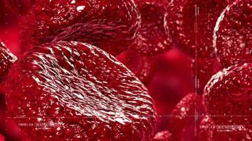 Red Blood Cells video