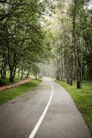 Road in green misty forest photo