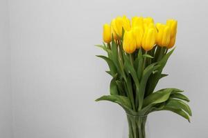 Flores de tulipán amarillo aislado sobre fondo blanco, para su diseño creativo y decoración foto