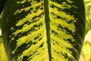 grassy leafy natural background or backdrop consisting of a variety of plants. tropical leaves photo