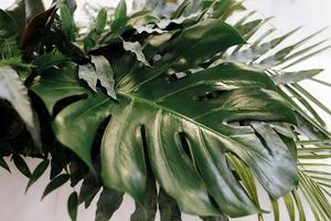 Varias hojas verdes exóticas de monstruos y palmeras para el concepto de naturaleza, conjunto de hojas tropicales aisladas sobre fondo blanco. foto