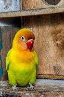 primer plano de los pájaros del amor son coloridos y hermosos foto