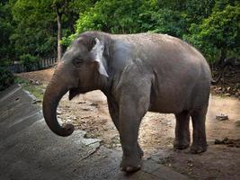 Los elefantes asiáticos se paran en medio de la naturaleza salvaje foto