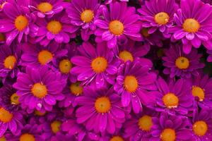 flores rosadas con hermosos pétalos foto
