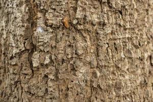 Textura en relieve seca de la corteza marrón de un árbol foto
