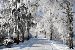 camino cubierto de nieve y árboles día soleado foto