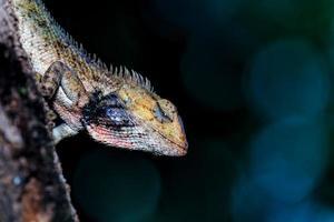 Close-up de lagarto de jardín oriental en la rama de un árbol foto