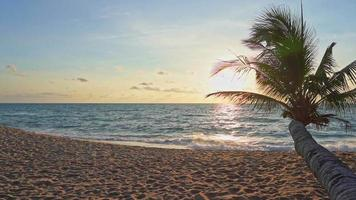 Beautiful sunset at tropical beach video