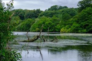 Hermoso paisaje de árboles, exuberante follaje y su reflejo en las aguas del lago Waterloo en Roundhay Park, Leeds, Reino Unido foto