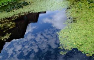 Pond or lake covered with green water lilies and beautiful blue sky and cloud reflecting on the lake water. photo