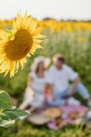 Young couple having picnic on sunflower field, blurred background photo