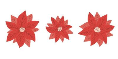 Poinsettia - Christmas star - flower vector collection in simple hand drawn style isolated on white background. Clip art, elements for winter festive design, floral wreath, invitation, poster
