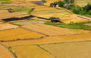 imagen del paisaje del campo de arroz de arroz después de la cosecha. imagen de la vista superior foto