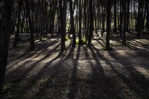 sombra de árboles en el bosque foto